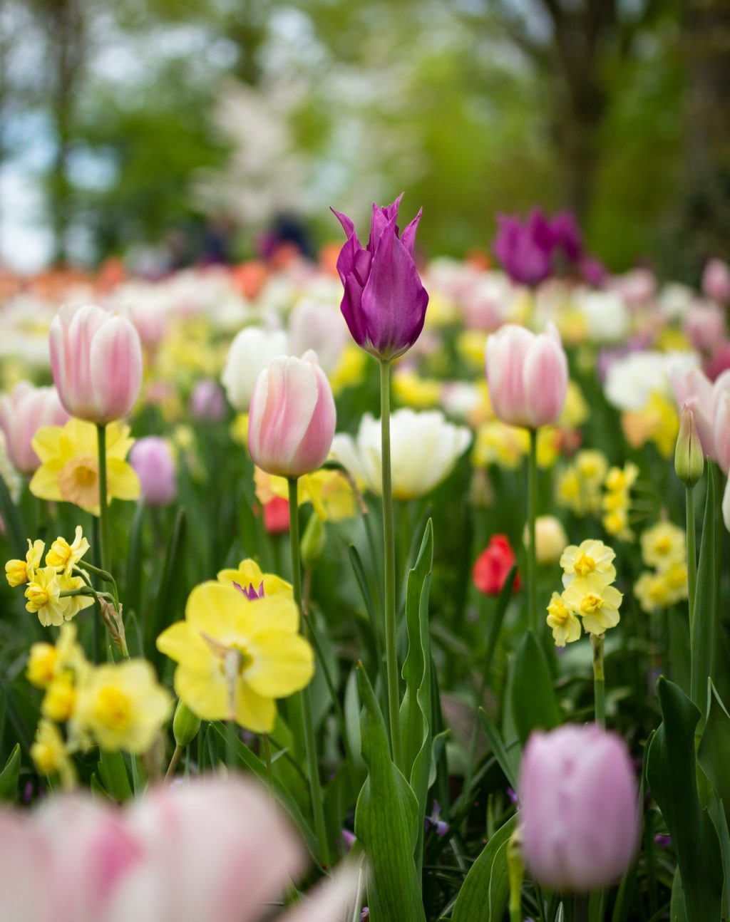 beautiful-flowers-blooming-bouquet-1076607